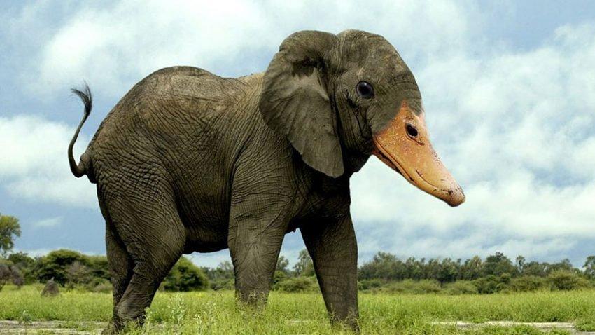 animais bizarros, criados a partir da natu... ops Pelo Photoshop (10)