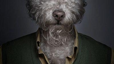 Underdog - Projeto em que o fotógrafo coloca cães com roupas (2)