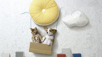 Aventuras fantásticas entre cão e gato (3)