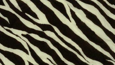 Pele de zebra em texturas para você baixar grátis (19)