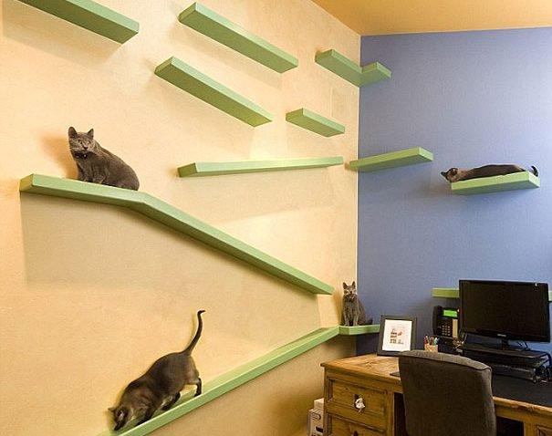 Casa totalmente projetada para gatos (3)