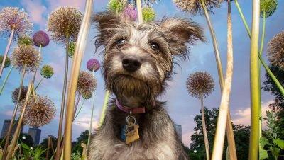 Lindas fotografias criativas de cachorros (25)