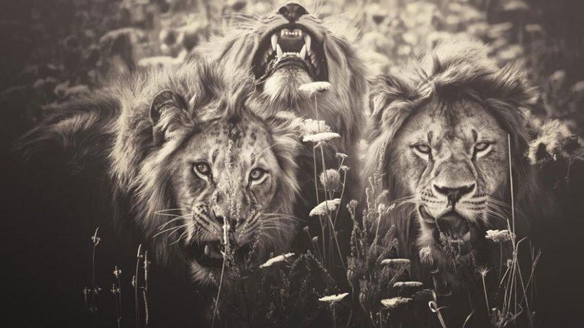 Fotografias inspiradoras de Animais em Extinção (4)