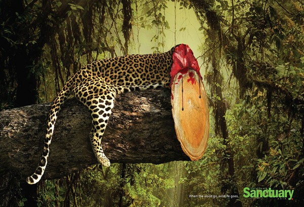 Campanha contra desmatamento (4)