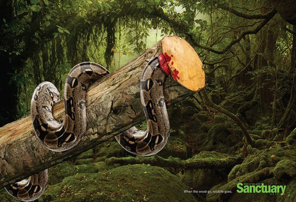 Campanha contra desmatamento (3)