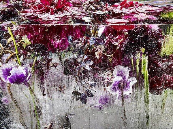 Flores congeladas viram obras de arte (3)