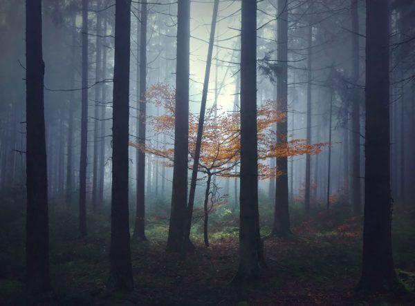 Fotografia de locais inspirados nas histórias dos irmãos Grimm (1)