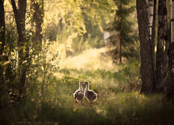 Fotografias inspiradoras com crianças e animais (7)
