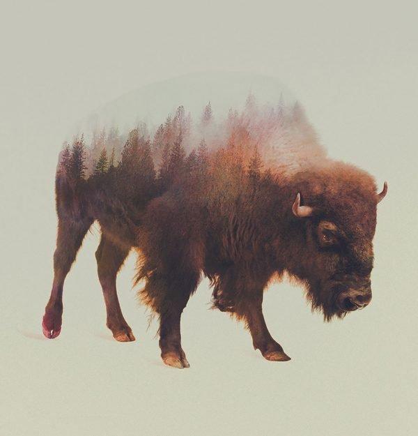 Fotografias inspiradas em animais e paisagens (1)