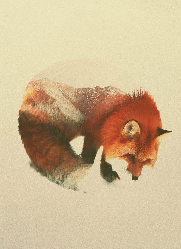 Fotografias inspiradas em animais e paisagens (8)