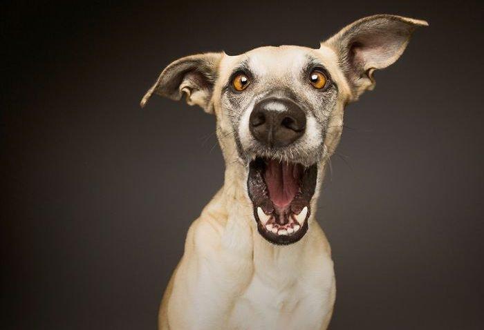 Fotografias criativas de cachorros (3)