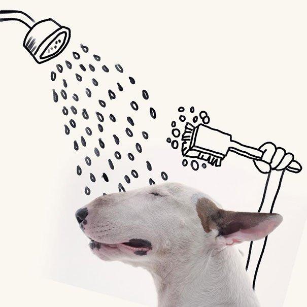 Fotos criativas de cachorro (18)