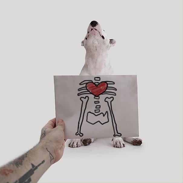 Fotos criativas de cachorro (6)