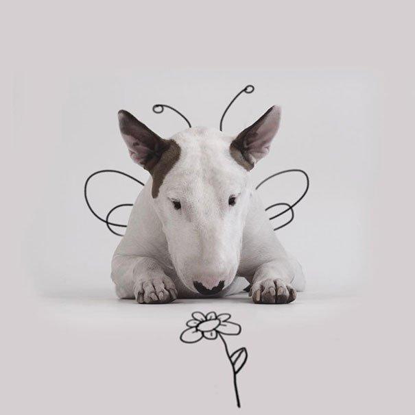 Fotos criativas de cachorro (2)