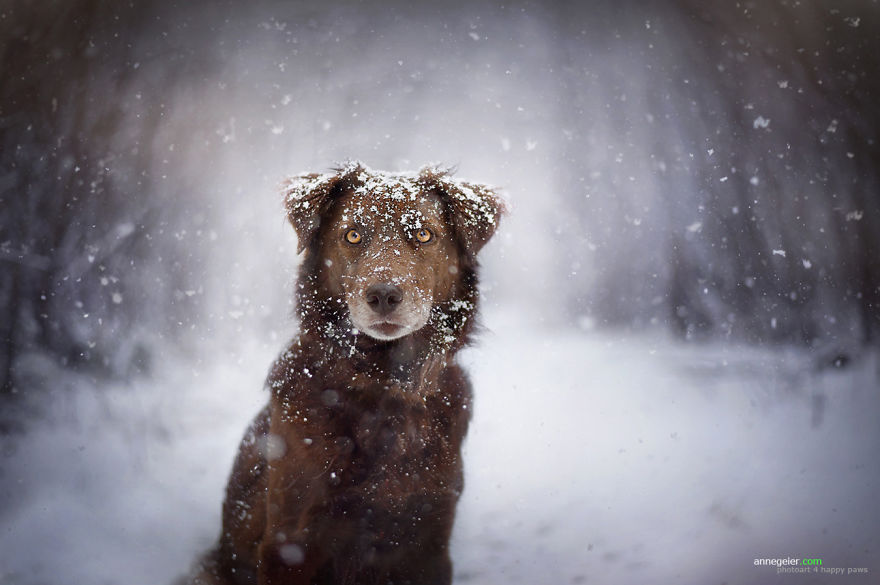 Fotografias de cachorros e lindas paisagens (9)