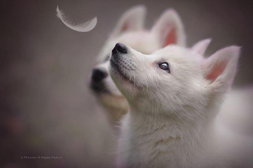 Fotografias de cachorros e lindas paisagens (26)