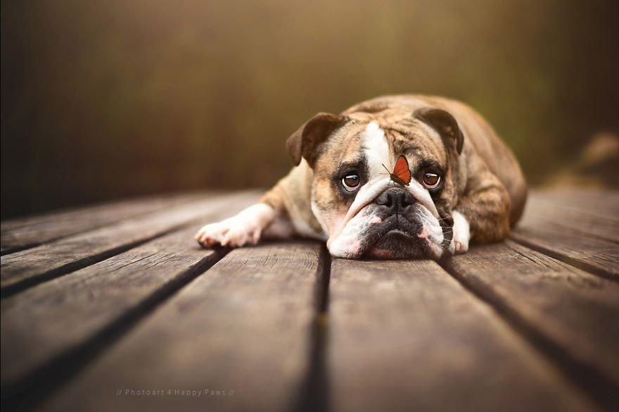 Fotografias de cachorros e lindas paisagens (2)