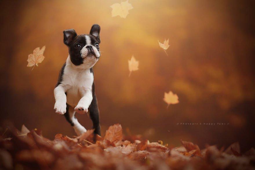 Fotografias de cachorros e lindas paisagens (25)