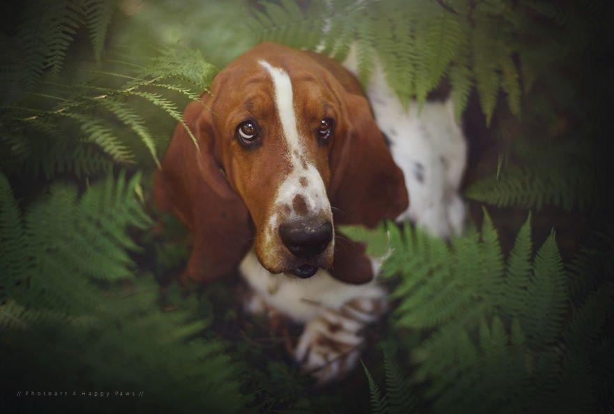 Fotografias de cachorros e lindas paisagens (22)