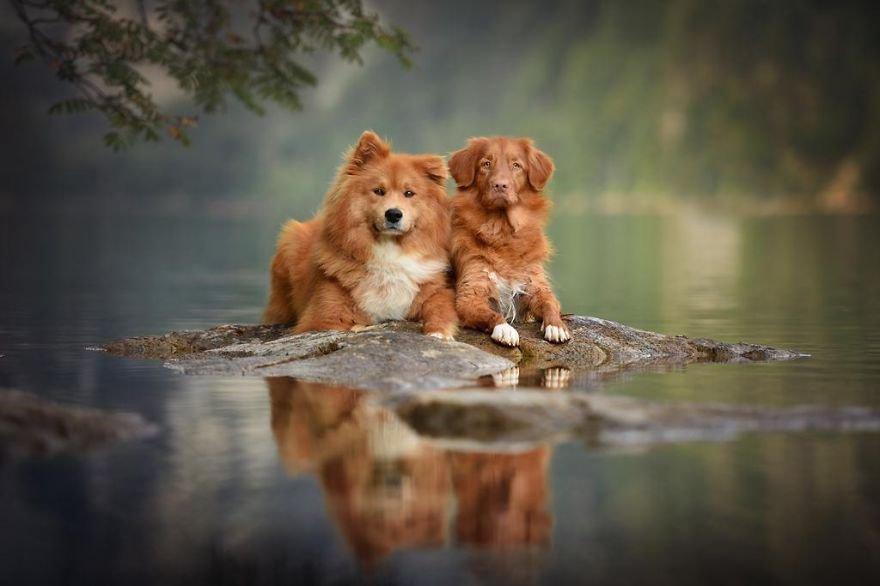 Fotografias de cachorros e lindas paisagens (21)
