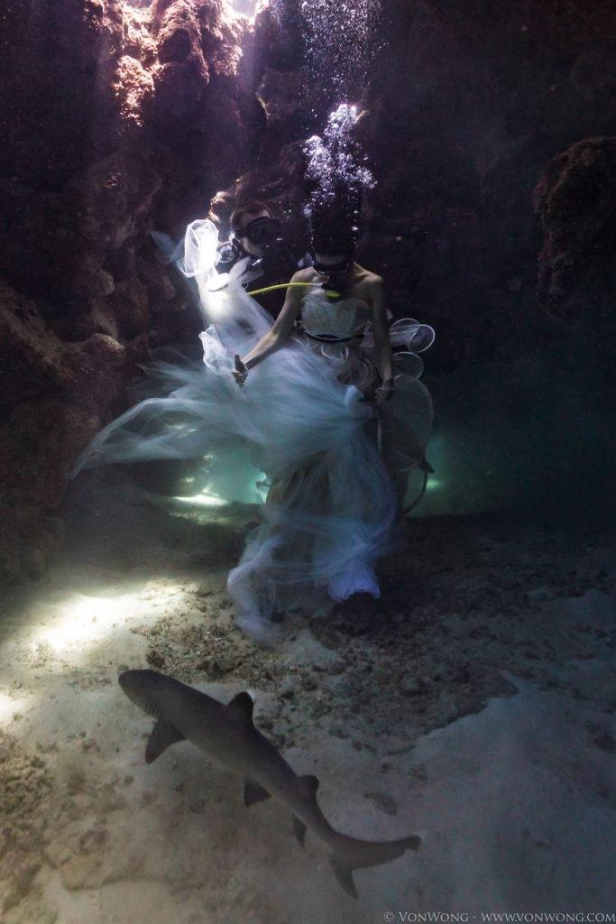 Fotografias debaixo da água em prol dos tubarões (8)