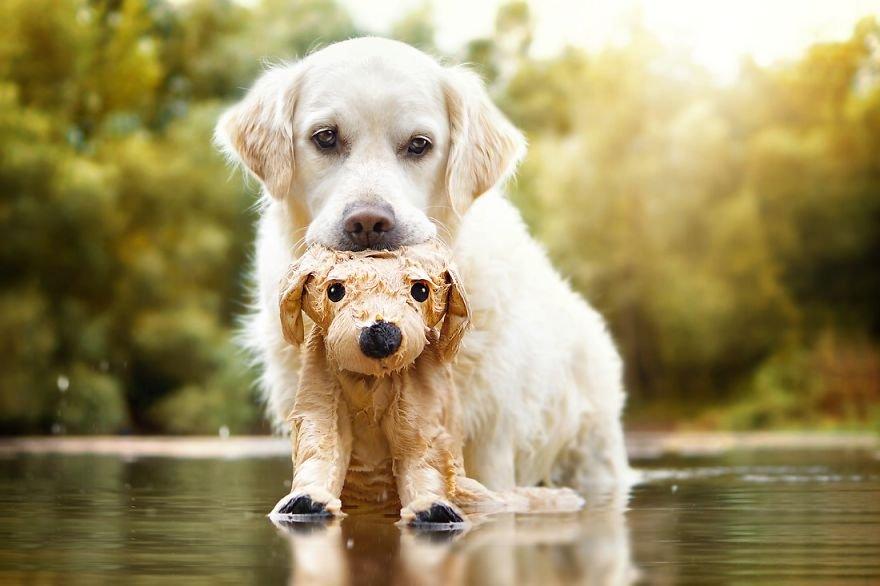 Fotografias criativas de cachorros (5)