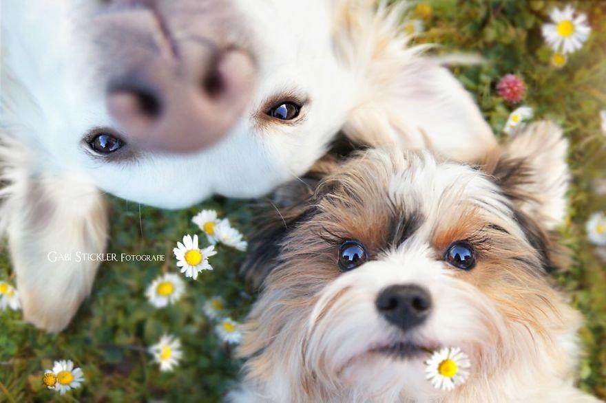 Fotografias criativas de cachorros (4)