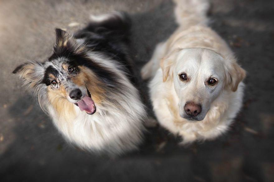 Fotografias criativas de cachorros (2)