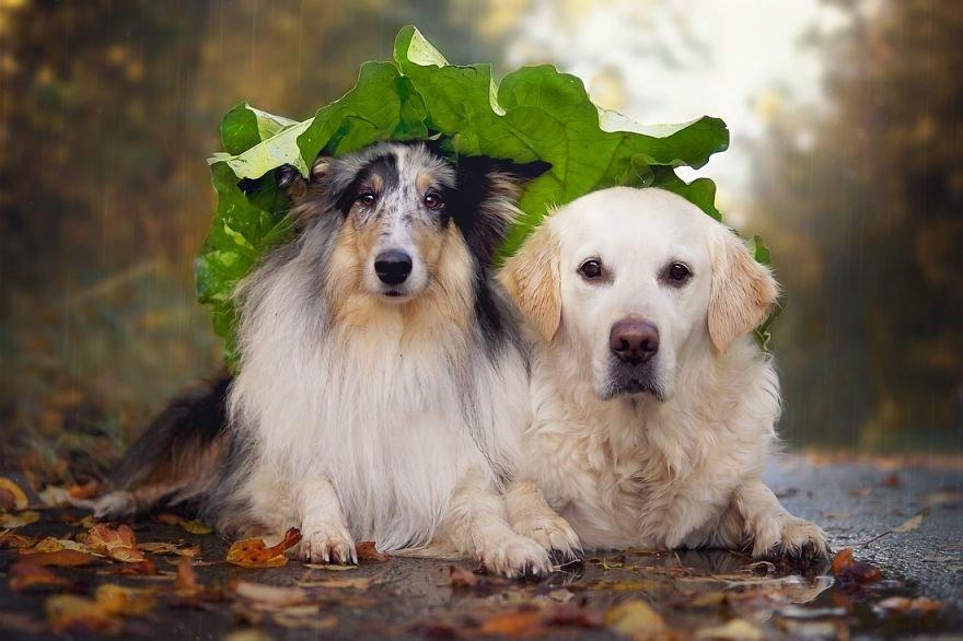 Fotografias criativas de cachorros (1)