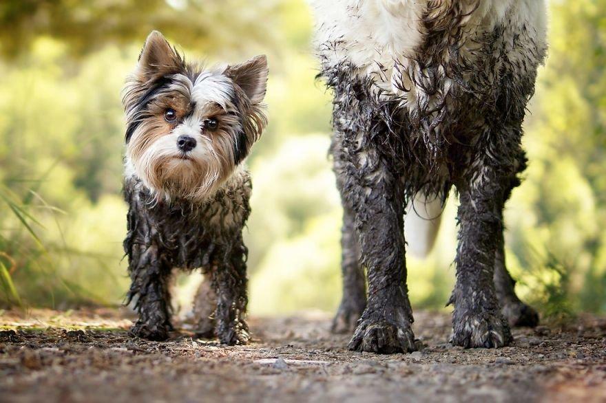 Fotografias criativas de cachorros (21)