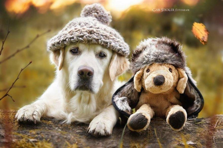 Fotografias criativas de cachorros (19)