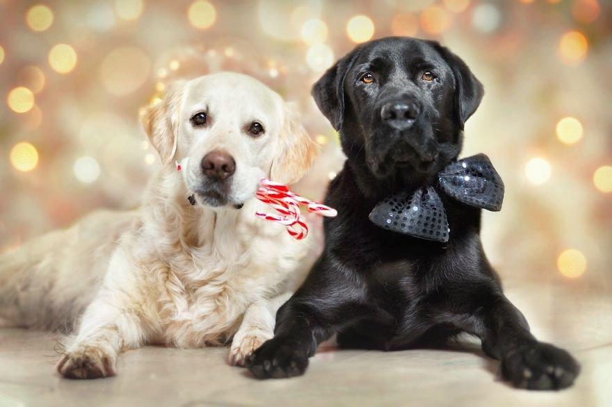 Fotografias criativas de cachorros (16)