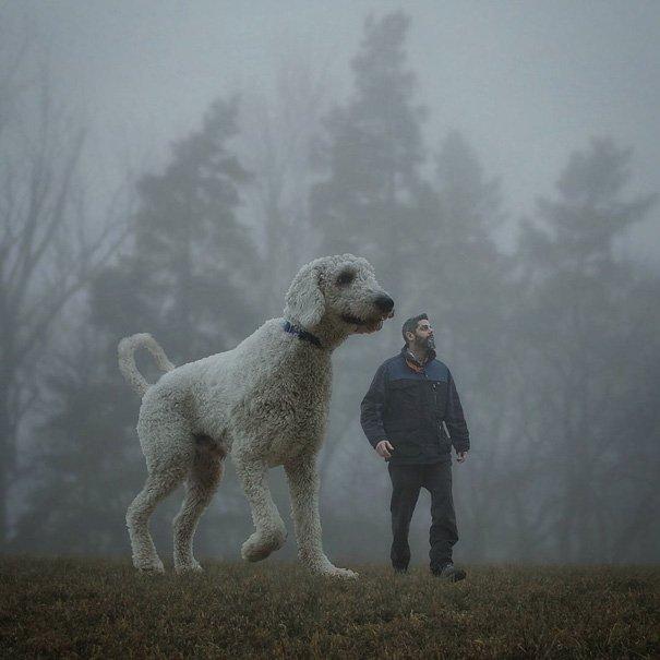 Fotógrafo e seu cachorro em fotos criativas (18)