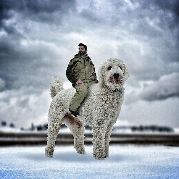 Fotógrafo e seu cachorro em fotos criativas (16)