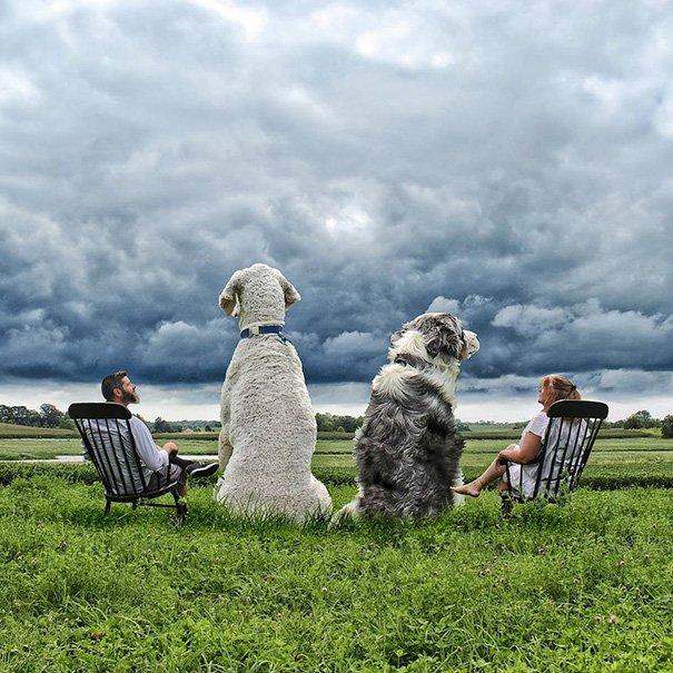 Fotógrafo e seu cachorro em fotos criativas (14)