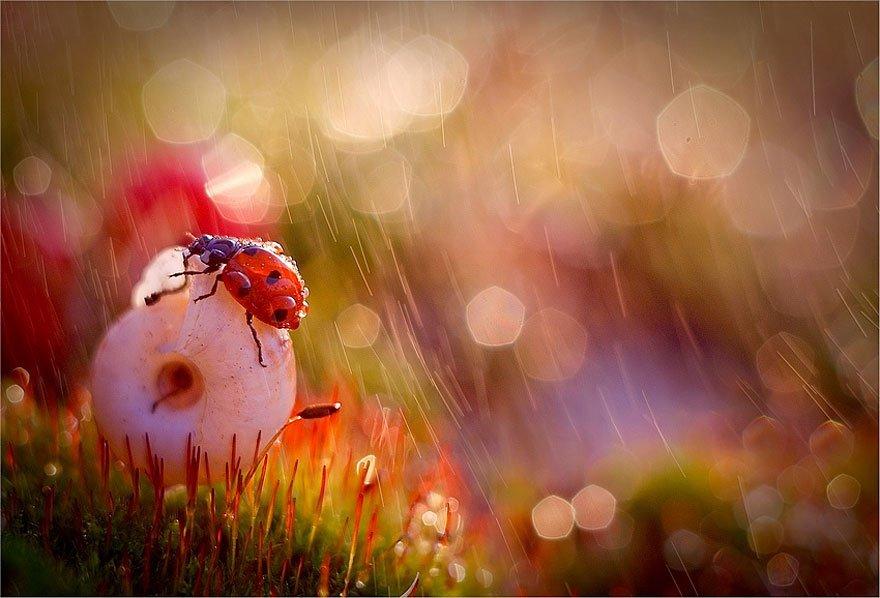 fotografia-macro-criativa-natureza (10)