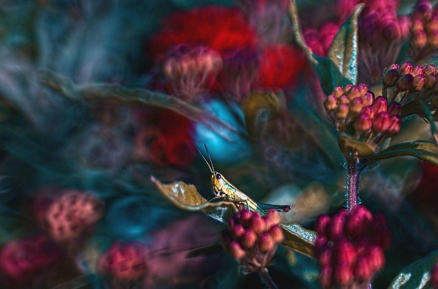 fotografia-macro-criativa-natureza (5)
