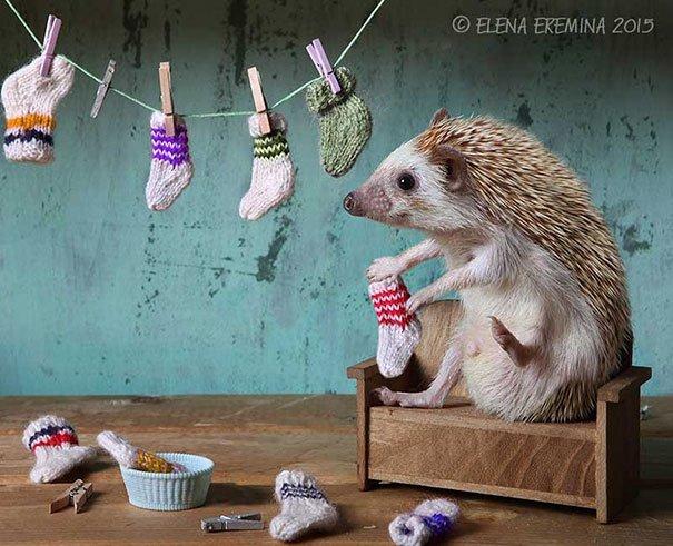 fotografias-criativas-animais (2)