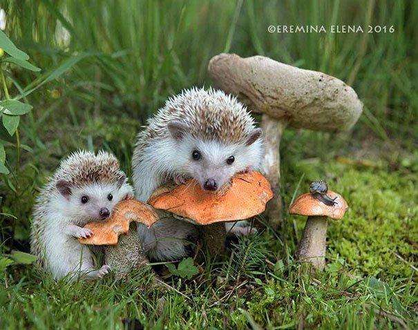 fotografias-criativas-animais (4)