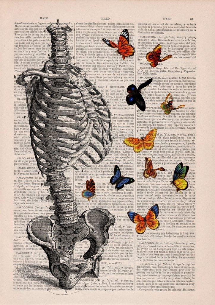 desenhos-anatomia-10