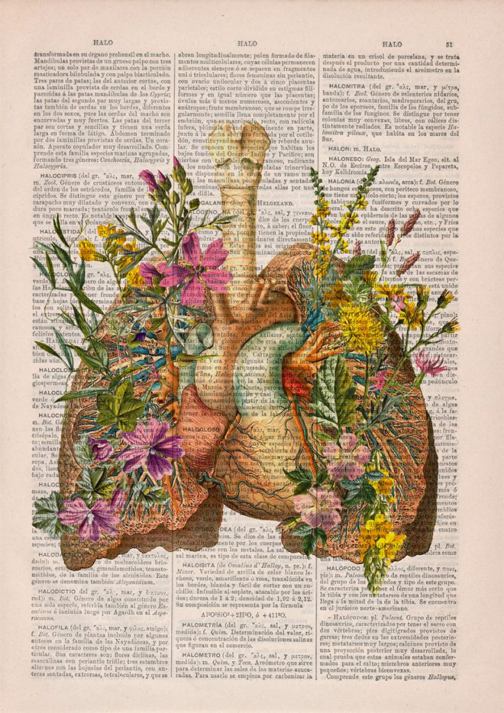 desenhos-anatomia-5