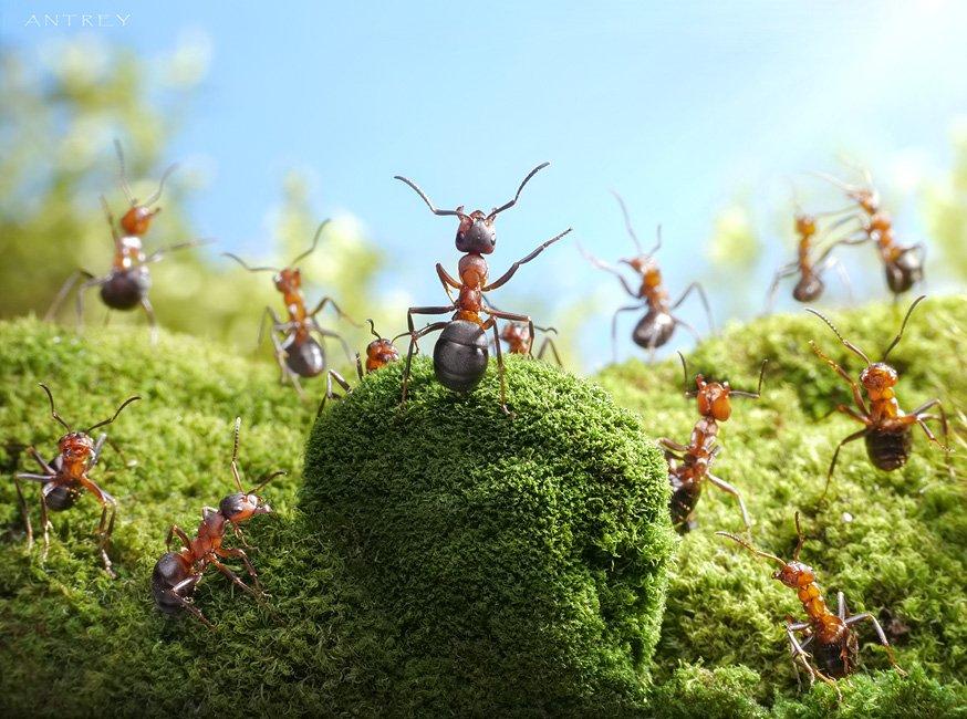 Série de Andrey Pavlov com fotos de formigas no seu cotidiano como pessoas.