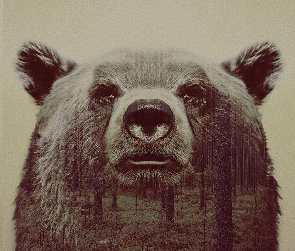 Fotografias inspiradas em animais e paisagens (10)