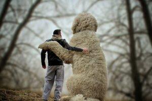 Fotógrafo e seu cachorro em fotos criativas (10)